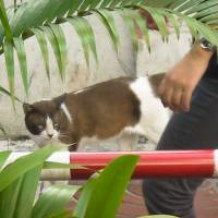 Bangkok street cat