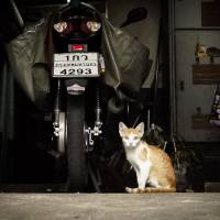 Bangkok street kitten