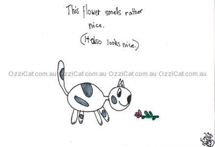 Cat drawings by Emily from Geelong, VIC   Australian National Cat Magazine - Ozzi Cat