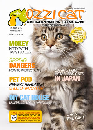 Issue #13 (Spring 2015) - Ozzi Cat Magazine for Cat Lovers and Cat Parents