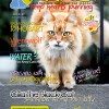 Ozzi Cat Magazine Issue #7 (Printed Copy)