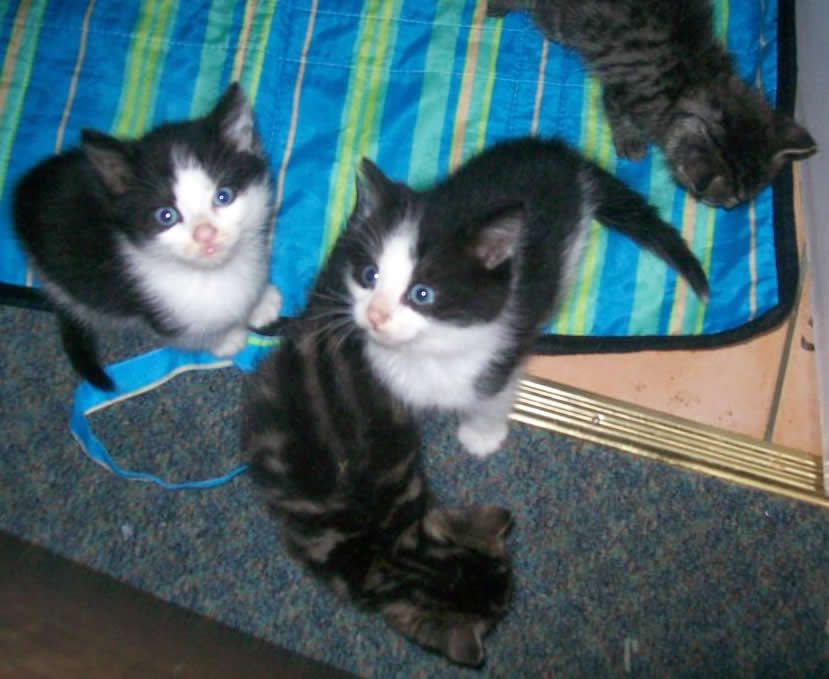 Kittens from 2nd Chance Cat Rescue