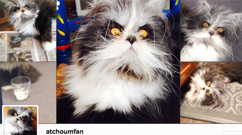 Atchoum - Sneezy - Cat With Excessive Hair Growth on Face - Hypertrichosis