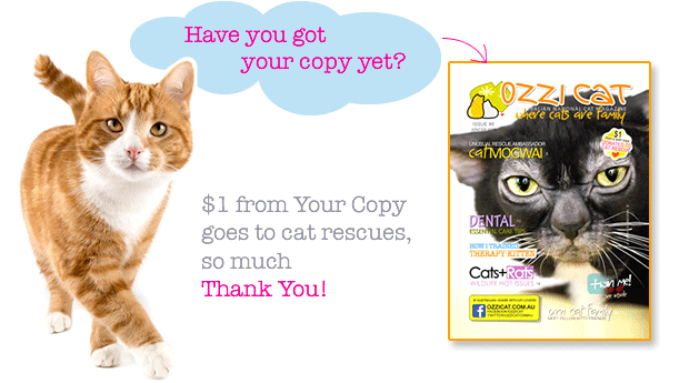 Australian cat magazine - Ozzi Cat - subscription - cats