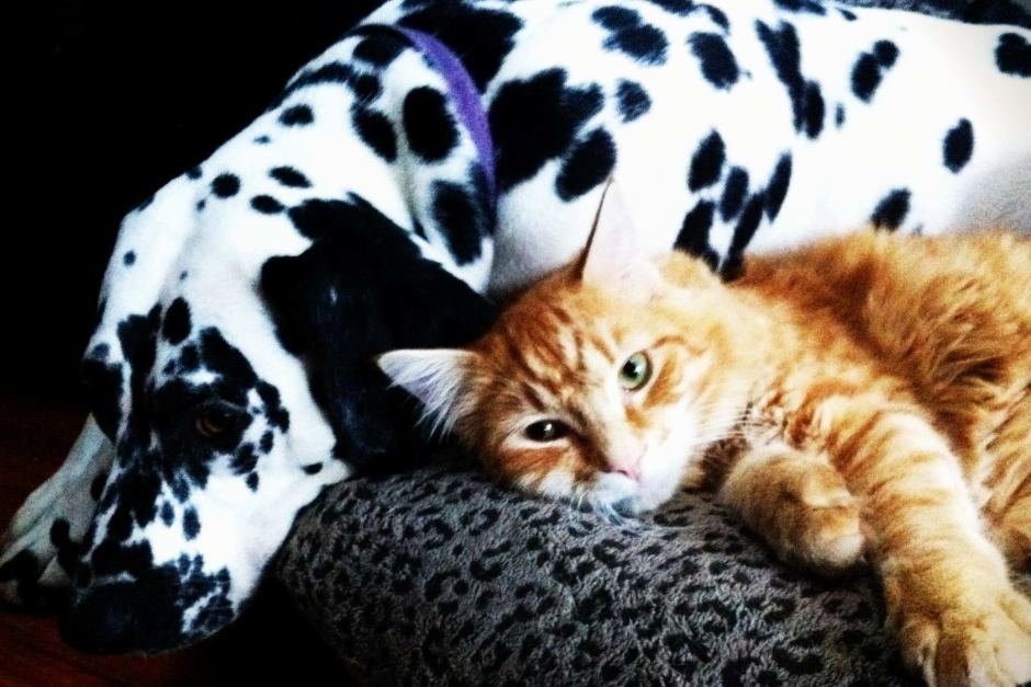 Rupert ginger cat - Poppy Dalmatian dog - travelled by train - missing and found