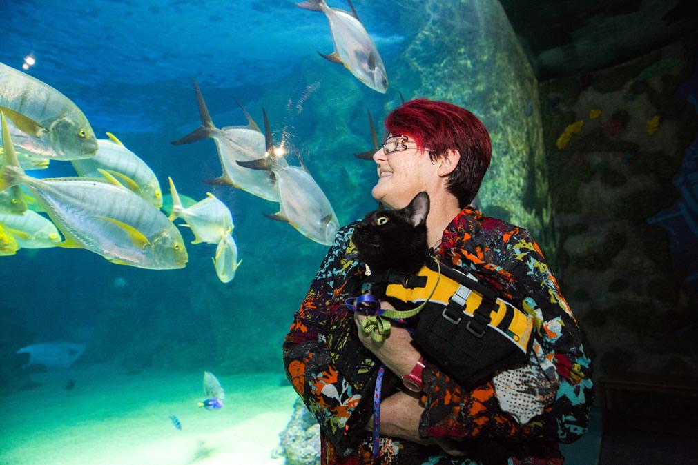 Black Cat Ninja and Dr Kim Kendall (Cafe Purrfection) enjoy SEA LIFE Sydney Aquarium - Cat Aquarium, Kitty Snorkel Experience