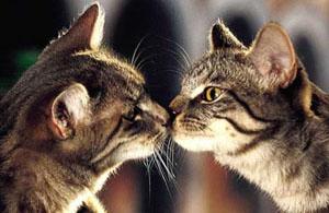 Carol Gurney - The Gurney Institute of Animal Communication - Animal Communication Workshop