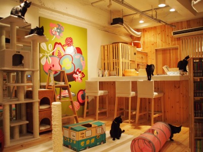 Cat Places - Cat Cafe Nekobiyaka - Black Cat Cm - Japan