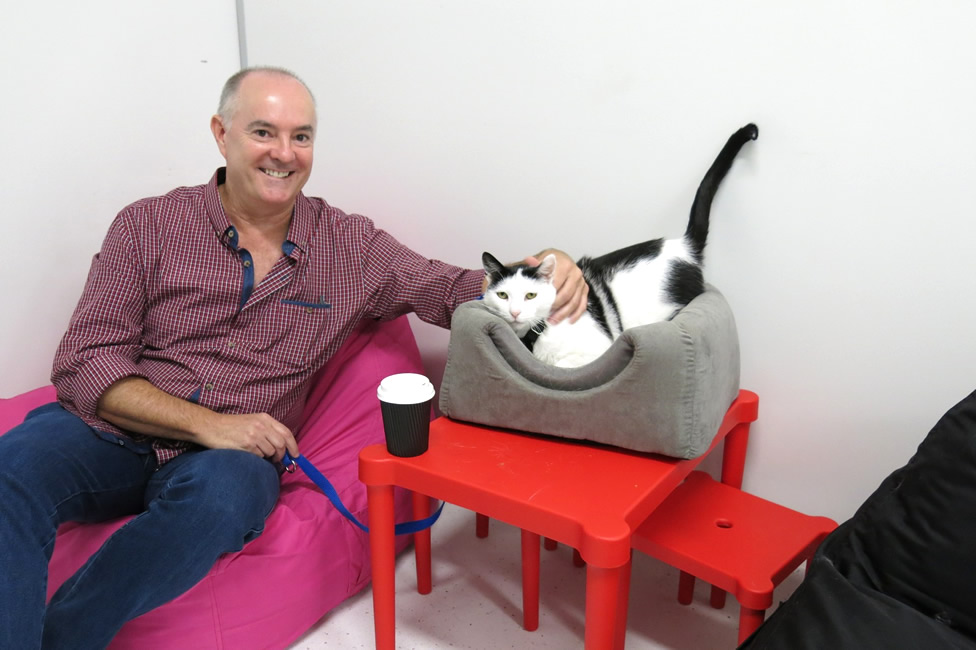 Cat Cafe Purrfection - Sydney - Australia - Cat Palace - Dr Kim Kendall