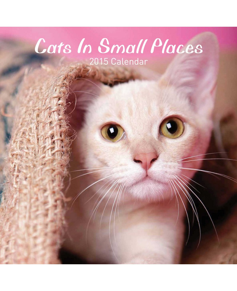 Cat Calendar 2015 - Cats in Small Places
