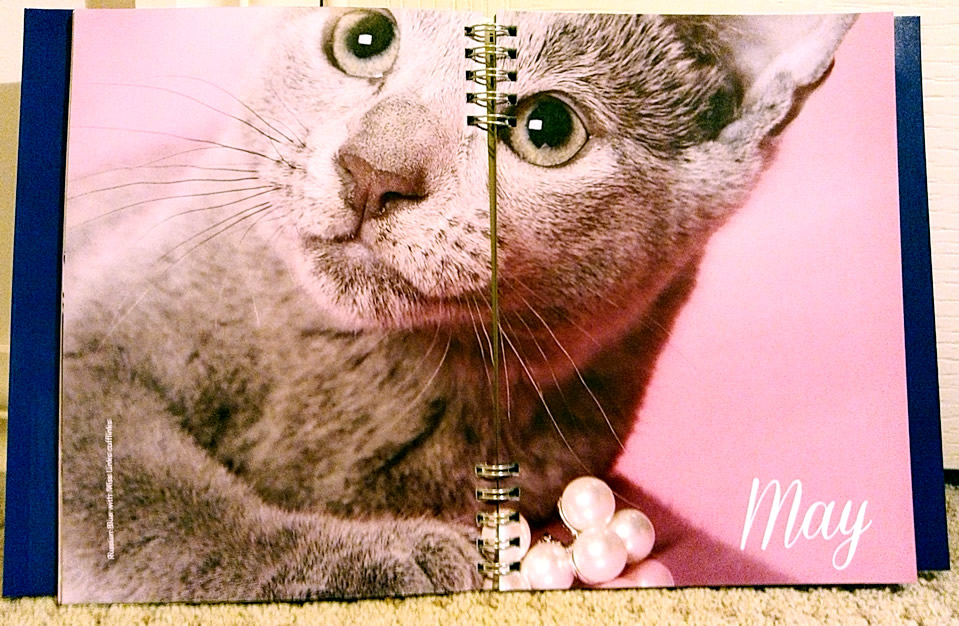 2015 Cat Calendars And Cat Diaries From Paper Pocket