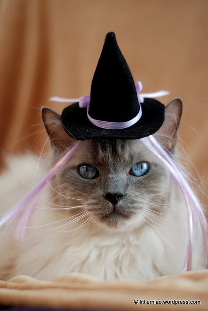 Cat Halloween Costume - Cat Hat - Witch Hat with Wiglet - The Witch of Floof