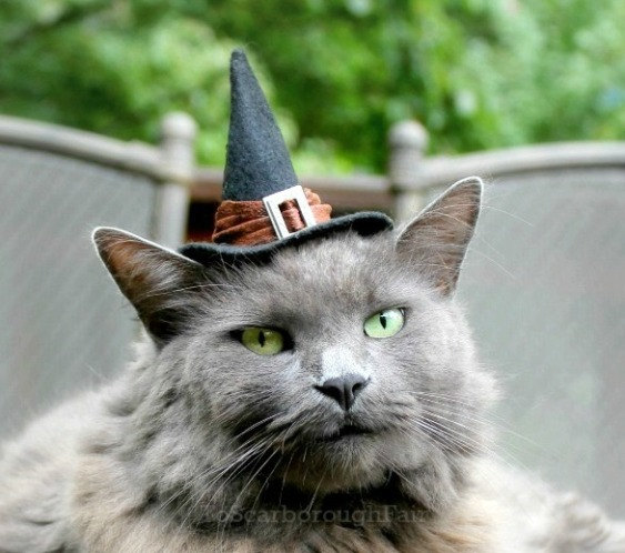 Cat Halloween Costume - Good Witch Cat Hat
