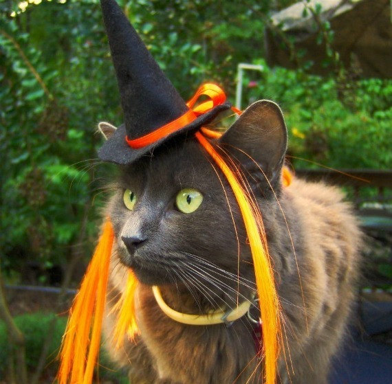 Cat Halloween Costume - Witch Cat Hat with Wiglet - The Witch of Orange