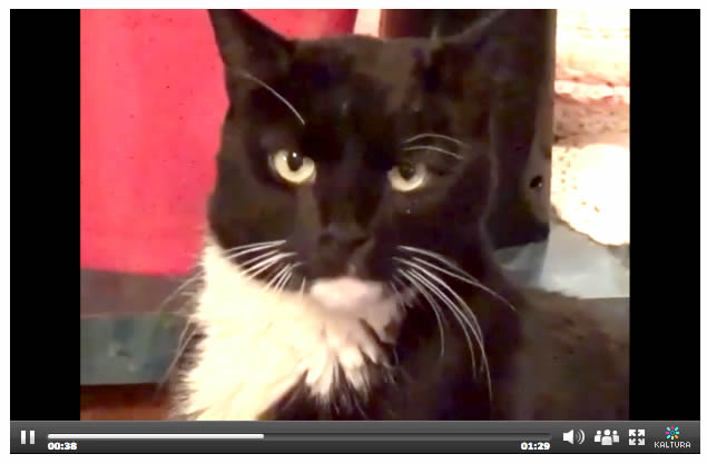 Cat Harley - chronic kidney disease - missing and found - black and white tuxedo