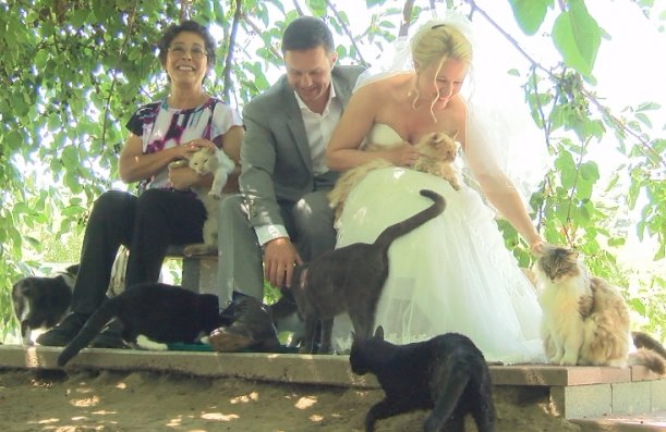 Wedding With Cats - Couple Got Married At Cat House On The Kings Cat Sanctuary