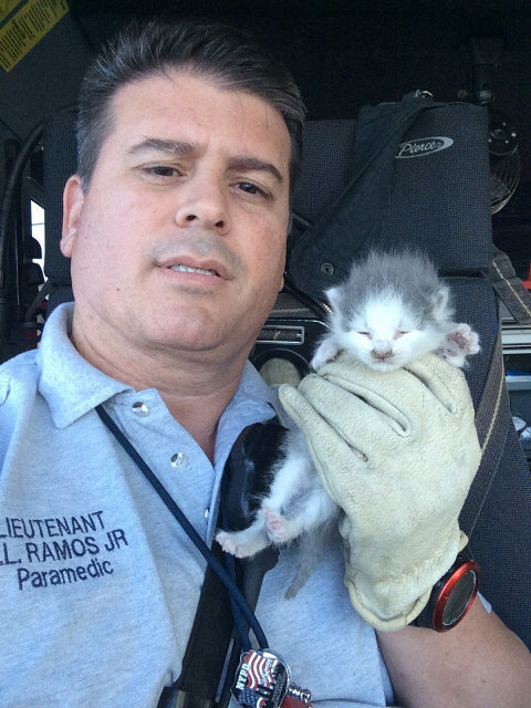 Amazing rescue: Grey and white kittens stuck in a ceiling at Miami International Airport and rescued by firefighters