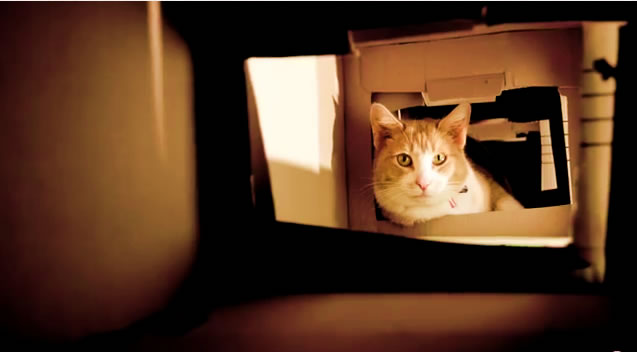 Cat Tower from 40 Boxes - Cat Rufus Inside. One more happy cat! - DIY Cat Project