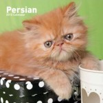 Cat calendar 2015 - Persians Calendar