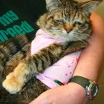 Celebrity Cat - Special Needs Cat Tucker Found Home