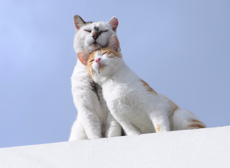 "A Couple of Black-and-White and Orange-and-White Cats in Sunshine - Cat Lover's Pick - Featured in Australian National Cat Magazine ""Ozzi Cat"" 