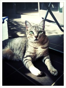 Gershwin The Cat