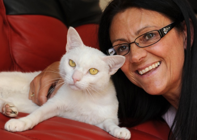 Injured Hit by Car White Cat Milo with the owner