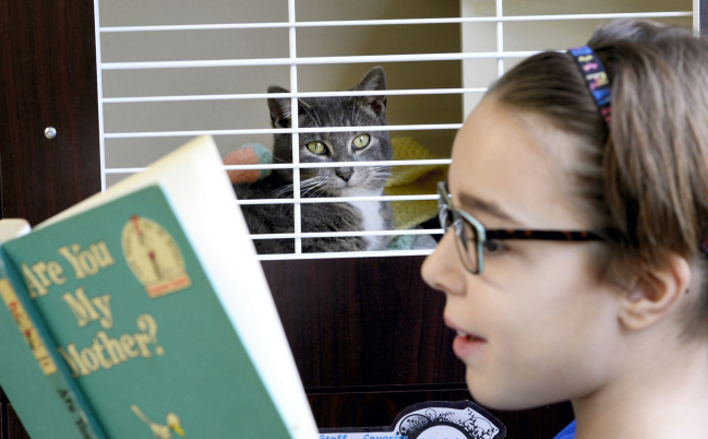 Ozlynde Reigert, 10, reads to shelter cat Vidia
