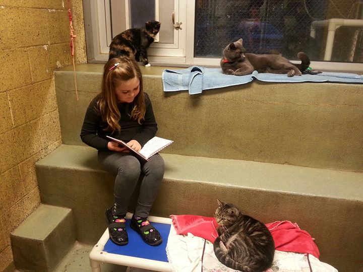 How to Teach Kids Love Animals - Kids Read to Shelter Cats