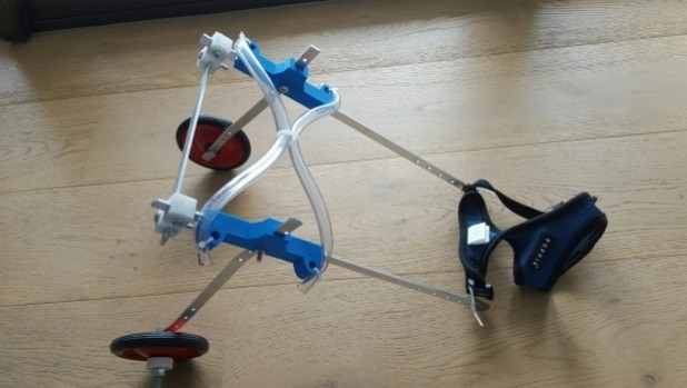 Handicapped Injured Cat in 3D-Printed Wheelchair