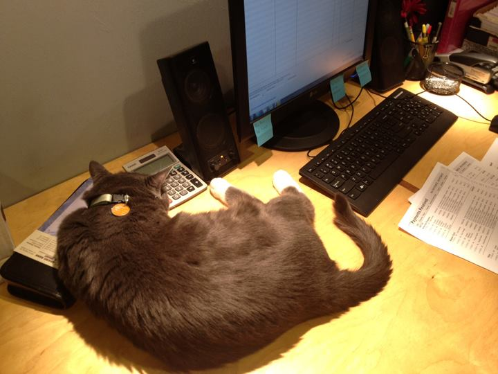 Oreo - stolen Armstrong hotel's cat