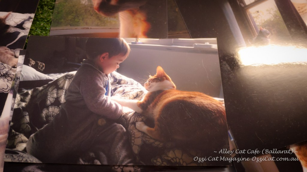 Alley Cat Cafe - Ballarat - Victoria - Australia