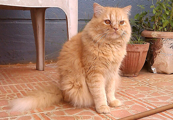 Photograph of Ginger Cat