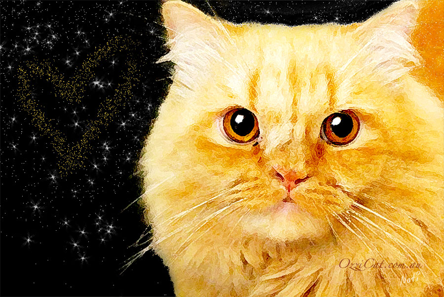 Cat Drawing - Picture of Orange Ginger Cat - Cat Lover's Pick - Featured in Australian National Cat Magazine Ozzi Cat