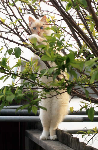 Cat Ruby sitting on the fence | Australian National Cat Magazine - Ozzi Cat