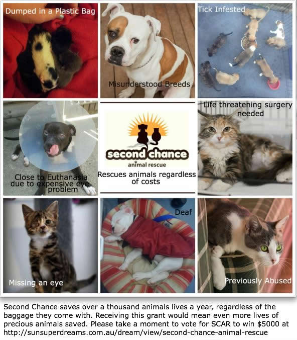 Second Chance Animal Rescue - vote to help  win a grant