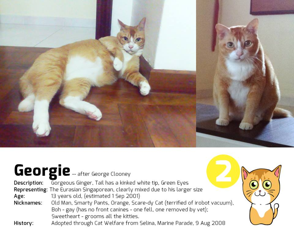 Singapore's First Cat Museum, Lion City Kitty. Cat Museum With Difference.
