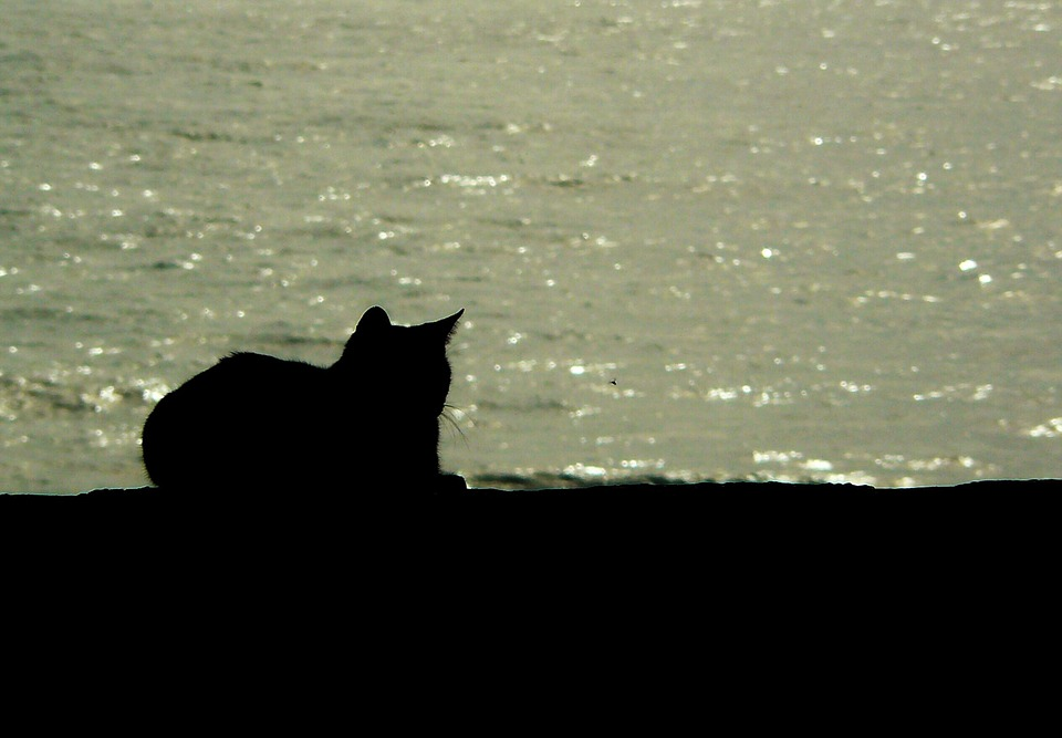 Black Cat Silhouette - Sits Near Sea