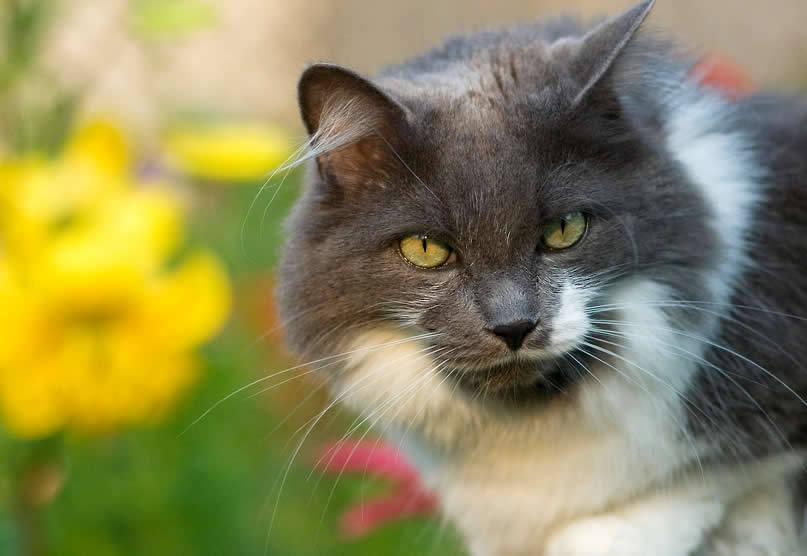 Cat Hoovie on the fence | Australian National Cat Magazine - Ozzi Cat