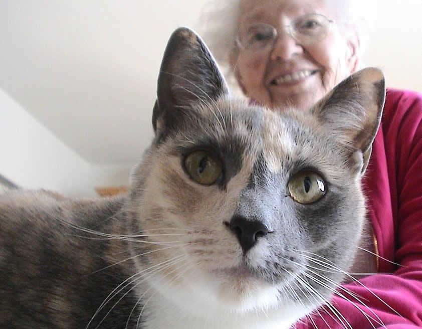 Cat Pearl