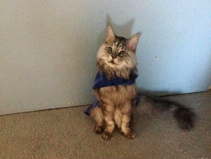 Cat - Stewie - The longest cat