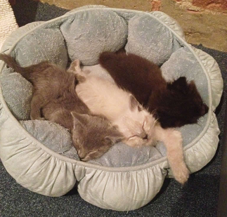 Cat bed - kittens sleeping  | Australian National Cat Magazine - Ozzi Cat