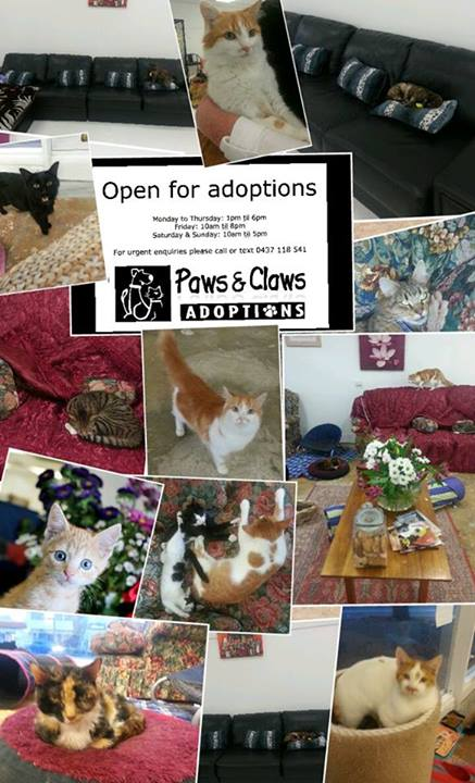 cat cafe - Adelaide - Paws & Claws Adoptions - rescue cats - adopt cat - Australia