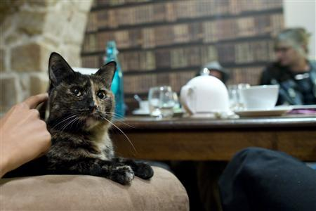 "Cat lovers enjoy beverages and cats at the ""Cafe des Chats"" - a cat cafe in Paris."