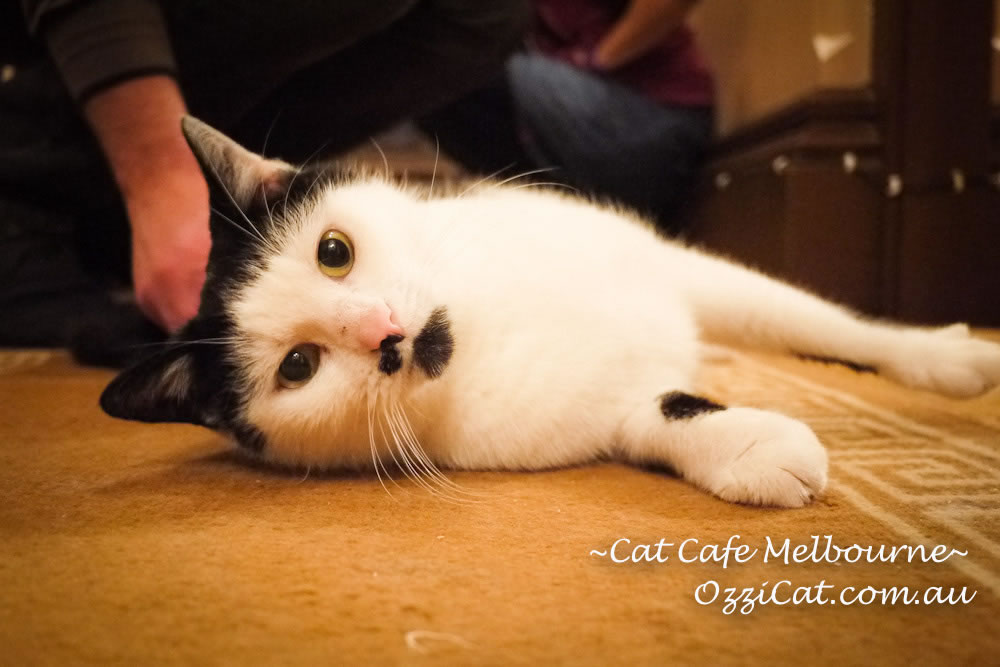 Dealing with cat behavior issues