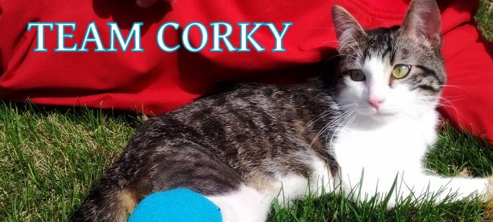 Cat Corky with Twisted Legs - Cradle Cat | Australian National Cat Magazine - Ozzi Cat