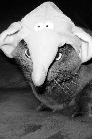 Cat in elephant hat