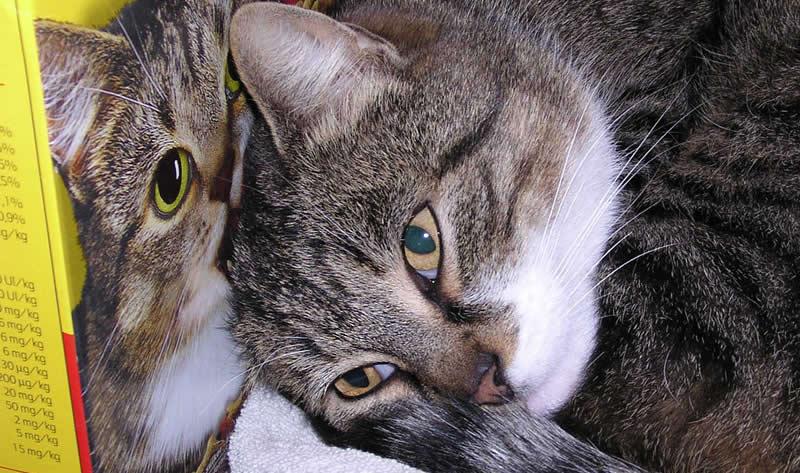 Cat naps near a cat food box