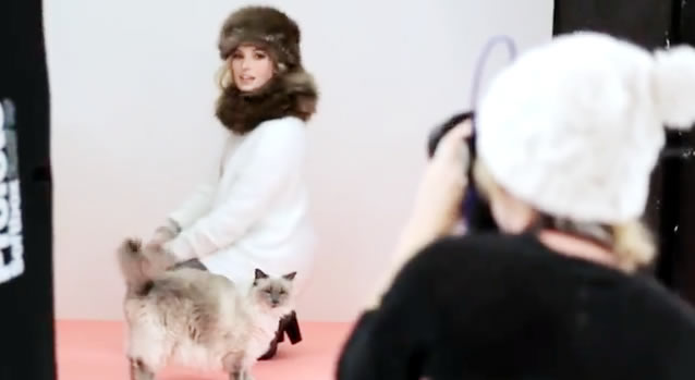 Fluffy Cat and Kittens in a Professional Cat Photoshoot