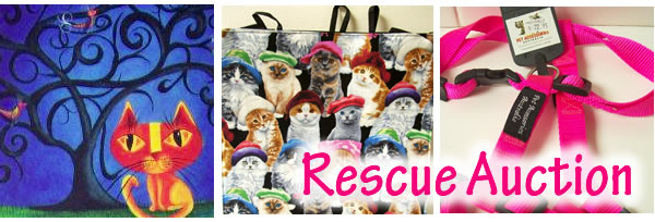cat rescue auction